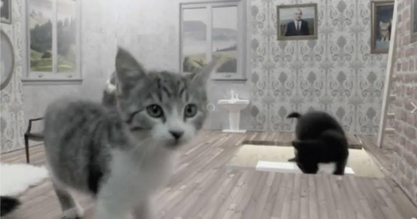 ¿Cansado de las malas noticias? En Facebook hay algo para los que aman los gatos.