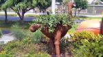 Árboles muertos son transformados en curiosas macetas - Noticias de surco san borja