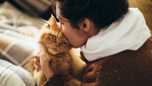 Conoce los beneficios de tener un gatito en casa. (Getty)
