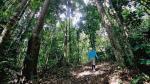 Gobierno espera reforestar 3,2 millones de hectáreas para el 2020 - Noticias de fauna silvestre