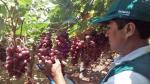 Productos agrícolas ingresarán a 12 nuevos mercados de Asia, Oceanía y África - Noticias de malasia