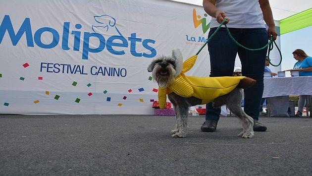 La Molina: Mascotas se lucieron en concurso de disfraces. (Difusión)