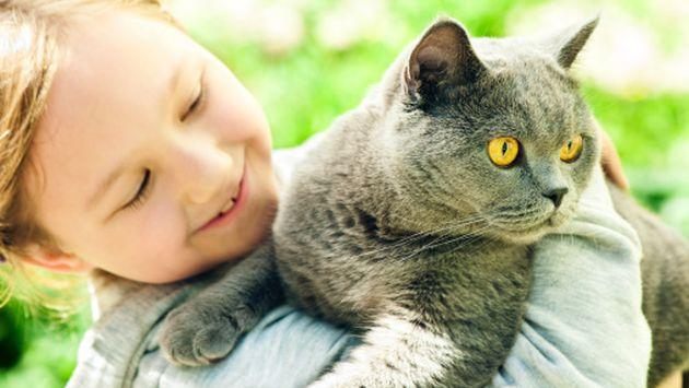 """""""Si bien los gatos se acicalan para limpiarse, el gato moderno sí se baña"""", acota Pancho. (Getty)"""