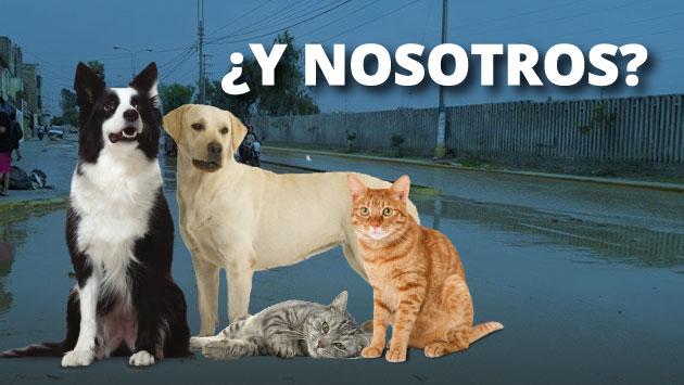 ¿Qué hacer con tus mascotas al momento de una emergencia? Prácticos consejos. (Perú21)