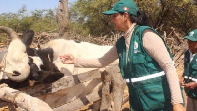 Se espera vacunar a 80 mil cabezas de ganado como prevención. (Foto: Senasa)