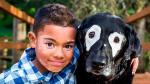 Un niño salió de la depresión tras conocer a un perro con su misma enfermedad. (Instagram white_eyed_rowdy)