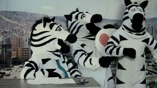 Cebras de Bolivia invaden el mundo. (@LaPazAlcaldia)