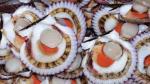 El 80% de la producción de conchas de abanico se ve afectado por 'Niño Costero' - Noticias de carlos posada