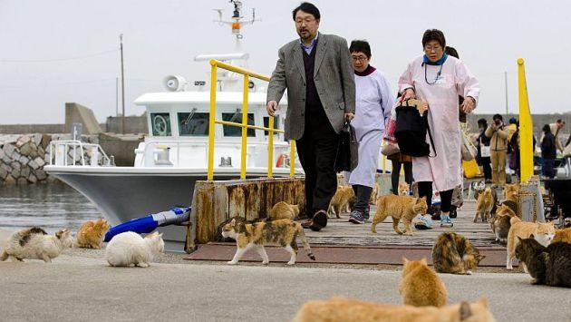 Los mininos disfrutan de la compañía de las personas sobre cualquier otra cosa. (Reuters)