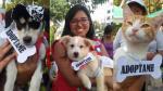 Municipalidad de Surco realiza campaña de adopción de mascotas rescatadas tras los huaicos [Fotos] - Noticias de loma campana