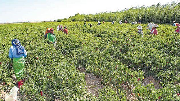 Los envíos agrarios crecen pese a lluvias por El Niño costero. (USI)
