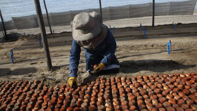 INCENTIVO. Norma de promoción permitirá multiplicar el empleo en el sector agrario. (USI)