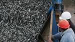 Ministerio de la Producción fija tope de captura a la anchoveta. (Perú21)