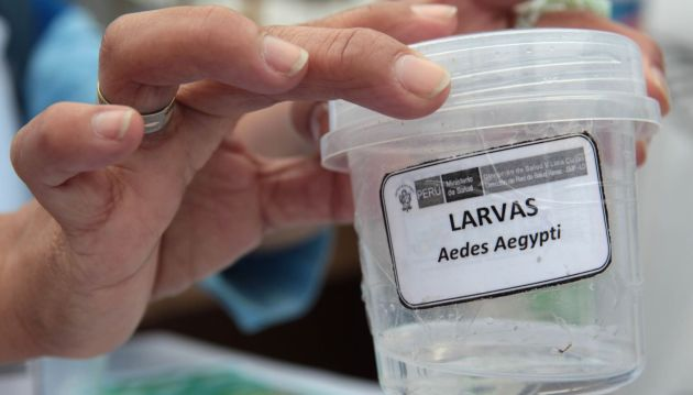 Los médicos recomiendan hacerse la prueba para descartar el virus del dengue ante cualquier síntoma de la enfermedad. (Andina)