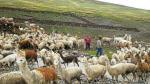 Sector vulnerable. La actividad agropecuaria presentó la mayor tasa de informalidad. (USI)