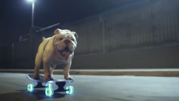 Otto, el bulldog skater peruano que participa en campaña de sensibilización en Suiza [VIDEO]
