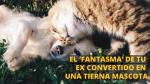 ¿Le pondrías el nombre de tu ex a tu mascota? Así fomentan la adopción de animales [Video] - Noticias de animales domésticos