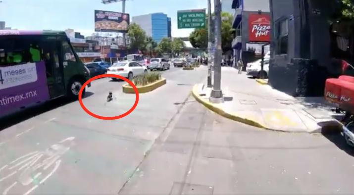 Este perro corría a toda velocidad por una avenida de México y una desconocida lo salvó [Video]