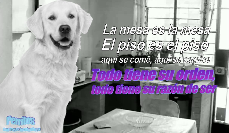 Facebook: 10 perritos con frases inspiradoras que cambiarán tu día  [Fotos]