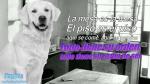Facebook: 10 perritos con frases inspiradoras que cambiarán tu día  [Fotos] - Noticias de felipe massa