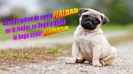 Facebook: 10 perritos con frases inspiradoras que cambiarán tu día  [Fotos] - Noticias de andrea raffo hanza