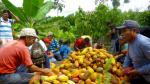 En el 2016, Bélgica importó 15,000 toneladas de cacao peruano. (Difusión)