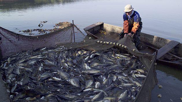 Resultado mensual se dio por una mayor captura de anchoveta. (Perú21)