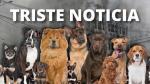 Incendio en Las Malvinas: Alrededor de 30 animales murieron calcinados al interior de galería - Noticias de atv