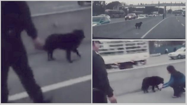 Estos policías rescatando a un perro es lo más tierno que veras hoy (Twitter/@PoliciaPeru)