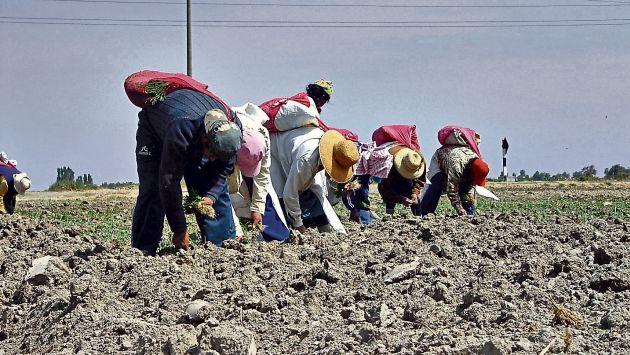 Minagri: Piura y Lambayeque recibirán S/342 millones para obras de infraestructura hídrica (USI)