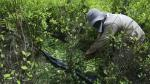 Producción de cocaína incrementó en más del 50% en Colombia, advirtió la ONU - Noticias de farc