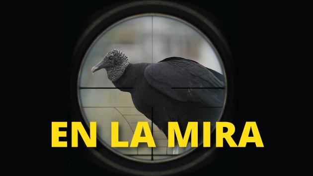 Solicitarán la ejecución de una caza sanitaria de gallinazos en las zonas de influencia del aeropuerto.