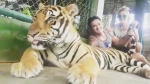 Paula Ávila posa con tigre dopado en Tailandia y desata la furia de los usuarios [FOTOS Y VIDEO] - Noticias de paula avila