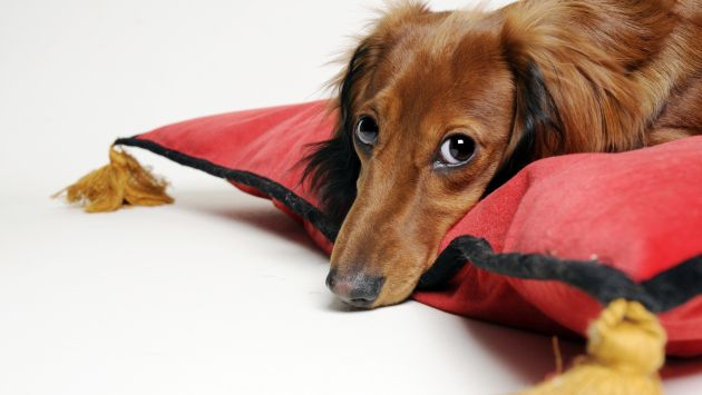 Toma tus precauciones si tienes mascota. (USI)